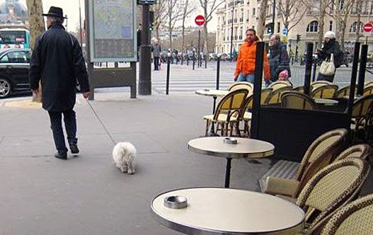 dogs-in-paris-1