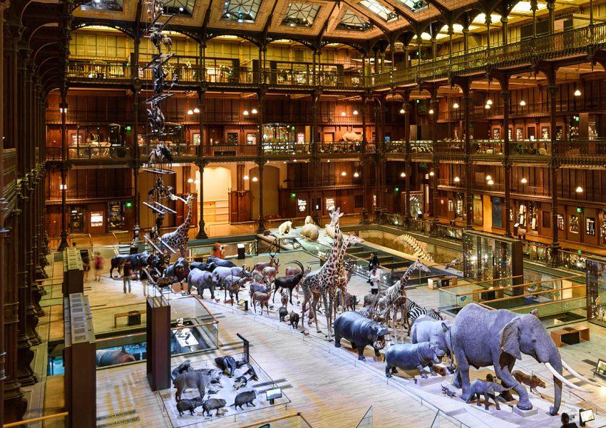 Галерея эволюции в Париже