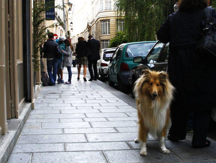 C собакой в Париж