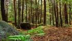 Барбизонский лес в Париже